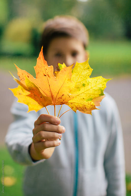 Boy holding a leafs by Zocky for Stocksy United