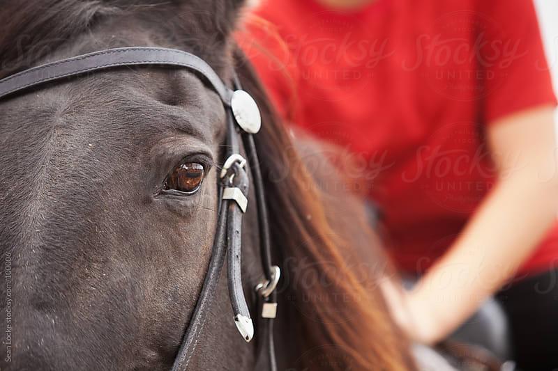 Equestrian: Close Up On Horse Eye by Sean Locke for Stocksy United