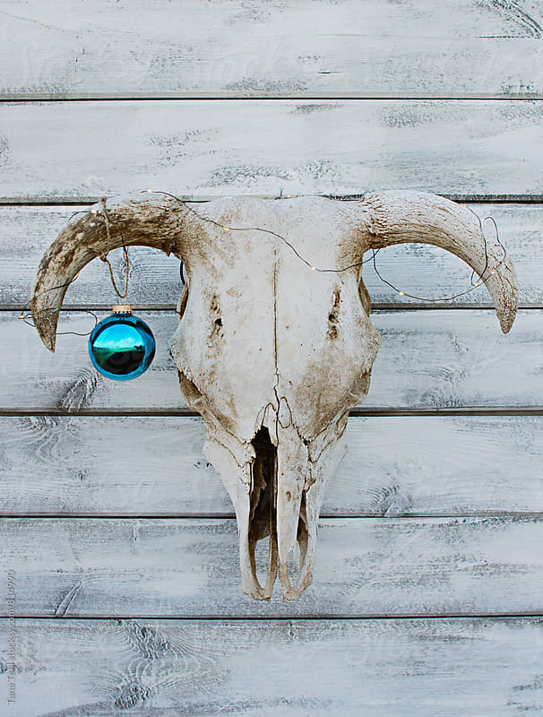Fairy lights and bright ornament decorate simple cow skull by Tana Teel for Stocksy United