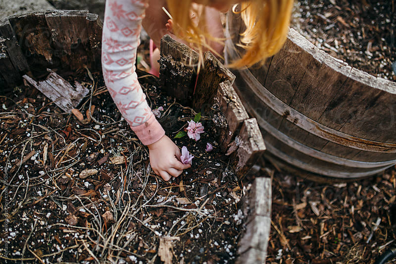 Little Girl Plants a Picked Flower in her Garden by Amanda Voelker for Stocksy United
