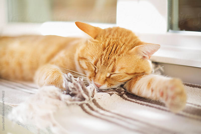 Cat sleeps peacefully on sunny windowsill in garden by Laura Stolfi for Stocksy United