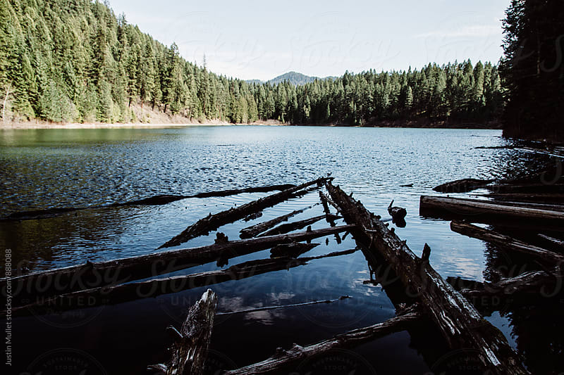 Dead logs floating near the shore of a mountain lake.  by Justin Mullet for Stocksy United