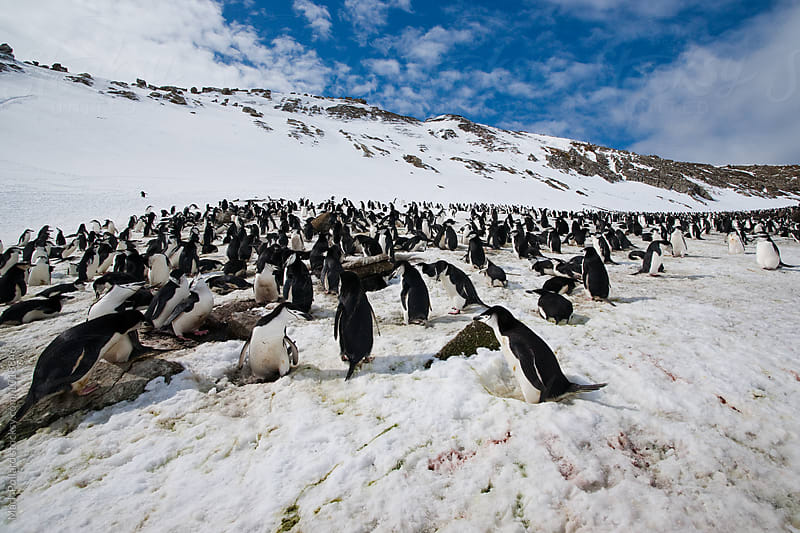 Antarctica - Antarctic Peninsula by Mark Pollard for Stocksy United
