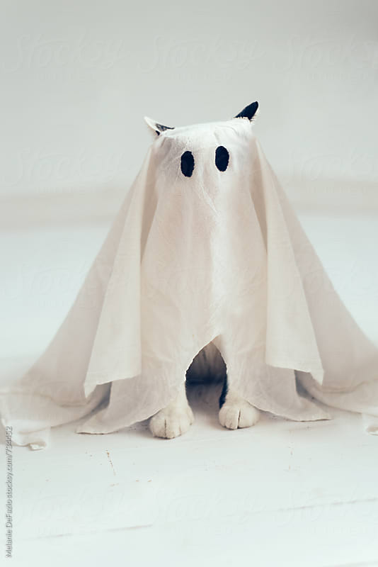 ghost cat by Melanie DeFazio for Stocksy United