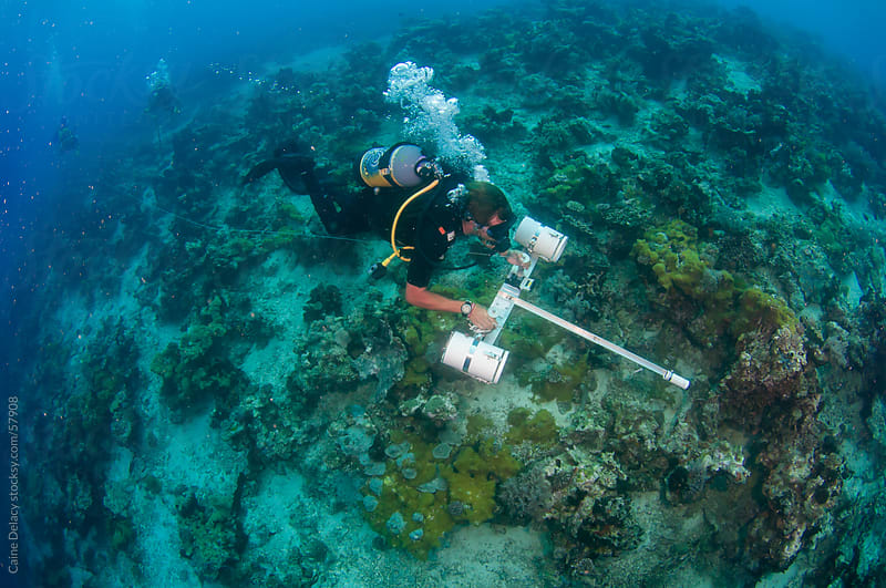 Using cameras to survey coral reef by Caine Delacy for Stocksy United