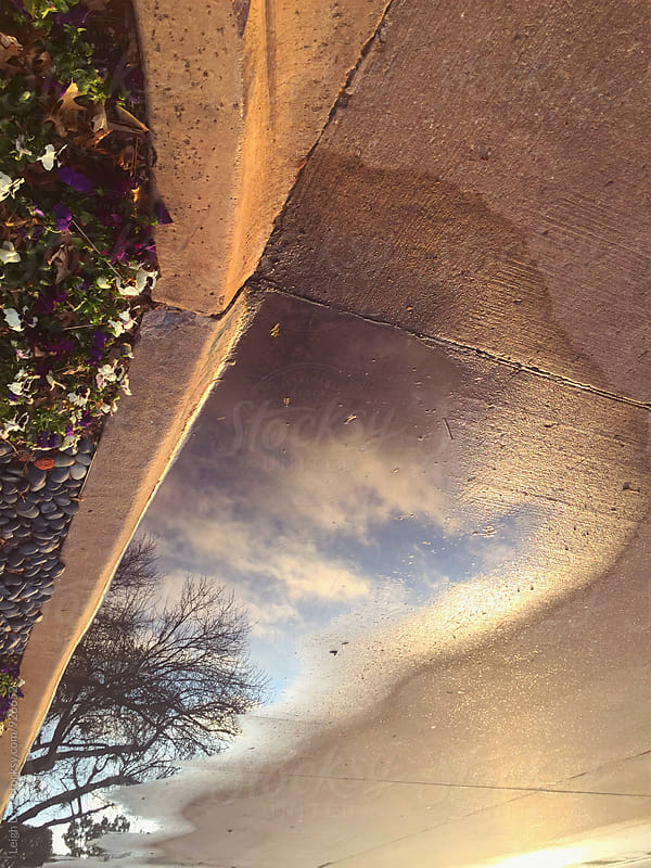 Sky & Tree Reflection in Puddle by Leigh Love for Stocksy United