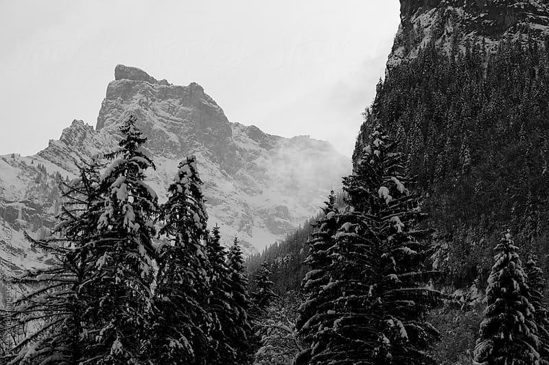Mountain view with snow and trees  by Freek Zonderland for Stocksy United