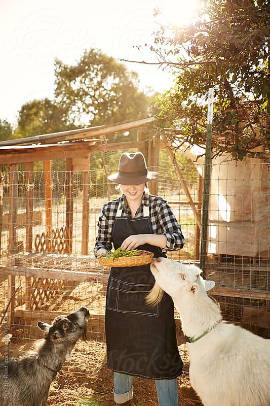 Woman farmer feeding her goats on organic farm by Trinette Reed for Stocksy United