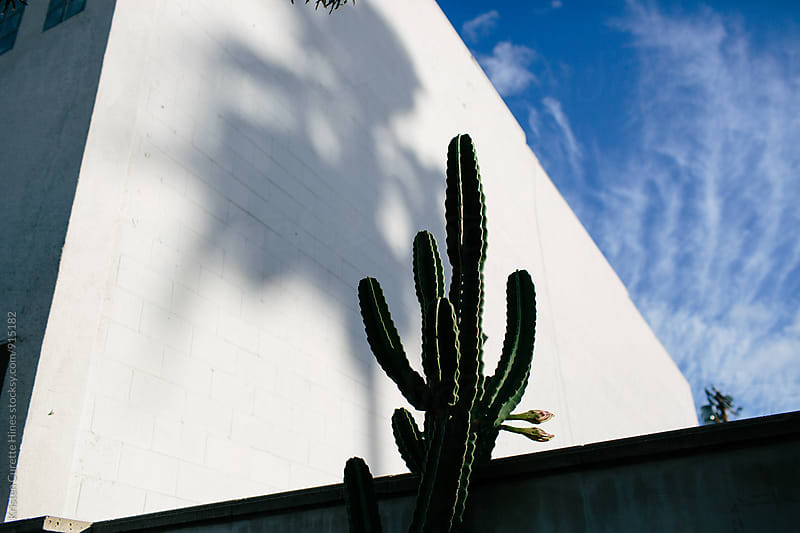 Harsh shadow casted by a tall cactus on a building wall   by Kristen Curette Hines for Stocksy United