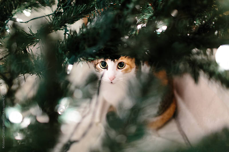 Cat under the Christmas Tree  by Kristen Curette Hines for Stocksy United