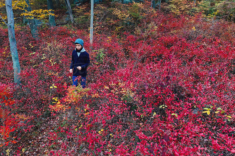 Teen boy walks through field of red foliage by Kelli Seeger Kim for Stocksy United