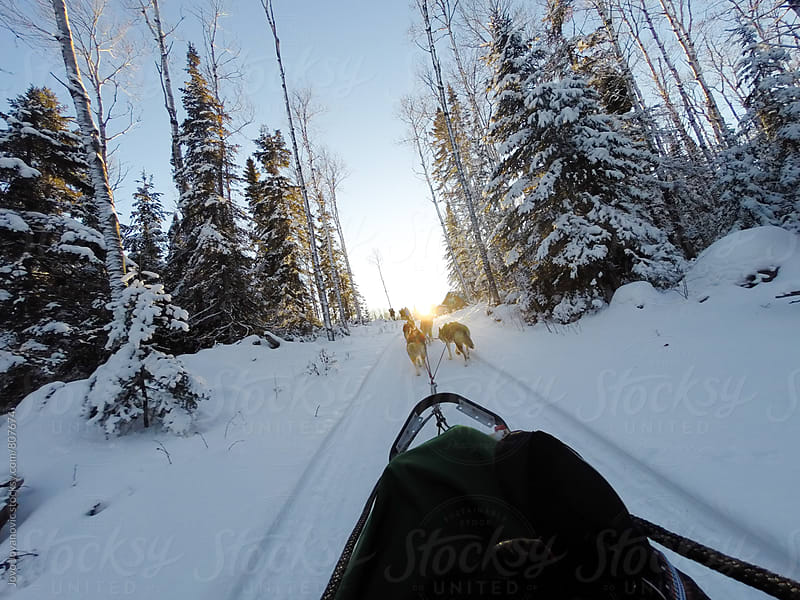 Dog sledding with huskies in a beautiful sunset by Jovo Jovanovic for Stocksy United
