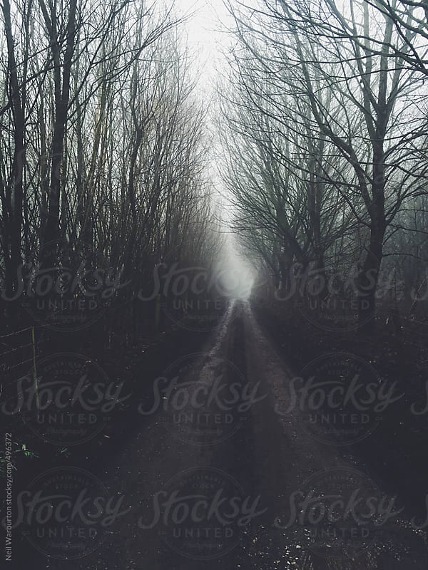 Tree lined country lane by Neil Warburton for Stocksy United