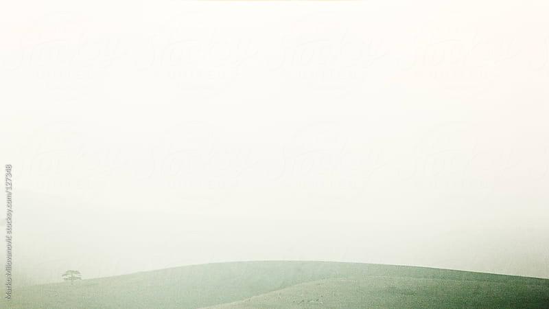 Lonely tree in meadow, field by Marko Milovanović for Stocksy United