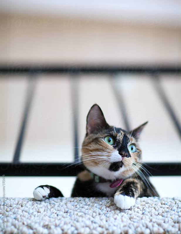 Cute tortoise shell cat looking out the window with wide green eyes by Carolyn Lagattuta for Stocksy United