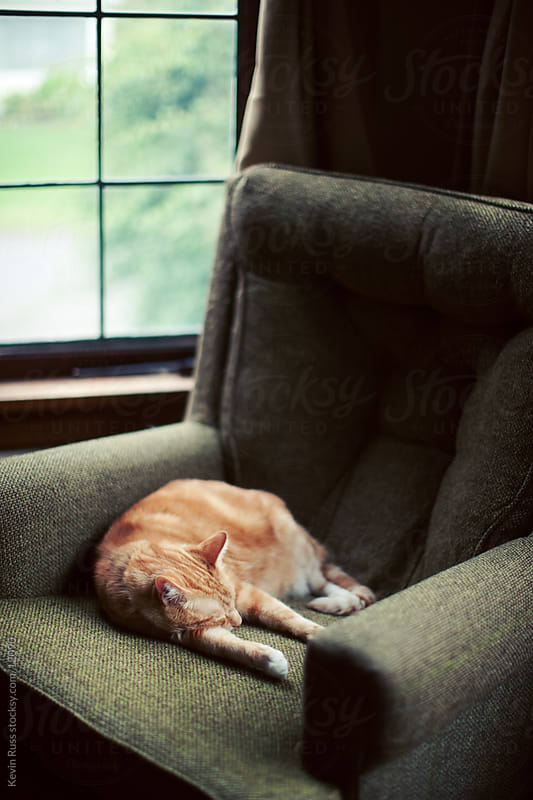 Cap Napping on Chair by Kevin Russ for Stocksy United