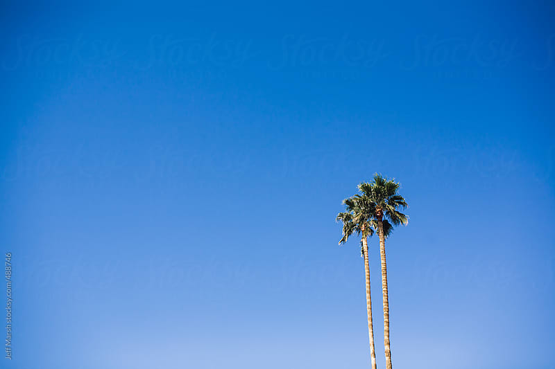 Palm Trees by Jeff Marsh for Stocksy United