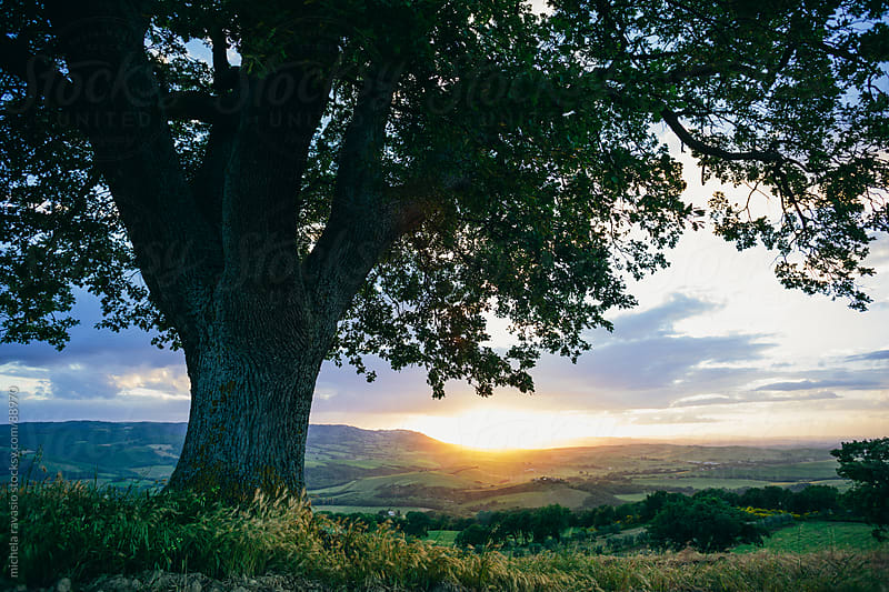 A tree on the Tuscan hills by michela ravasio for Stocksy United