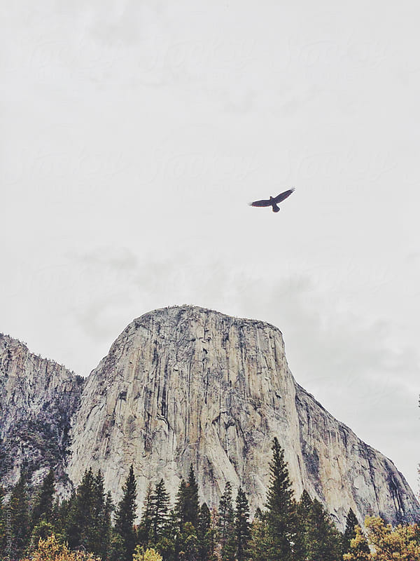 El Capitan, Yosemite by Sean Horton for Stocksy United