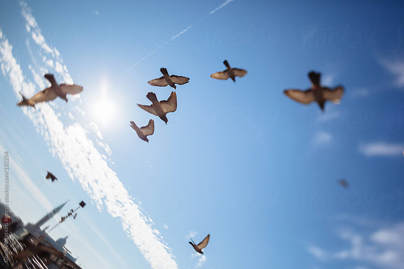 Flock of Pigeons in Venice by Good Vibrations Images for Stocksy United