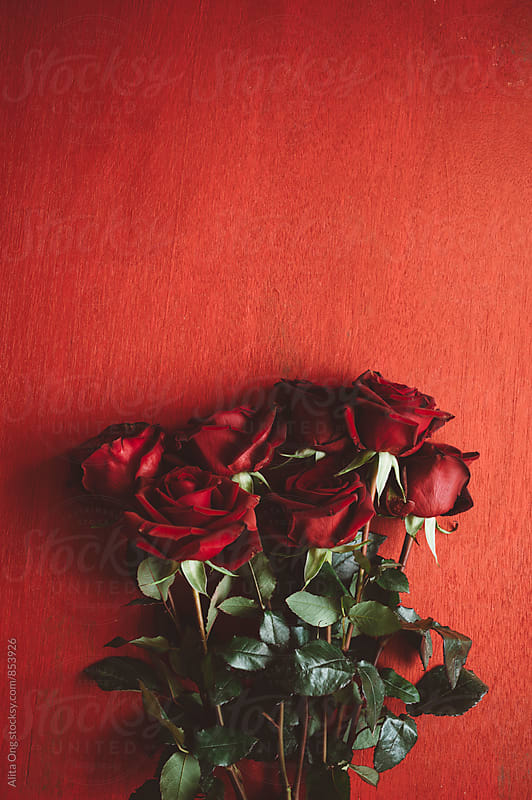 Red roses on red background by Alita Ong for Stocksy United