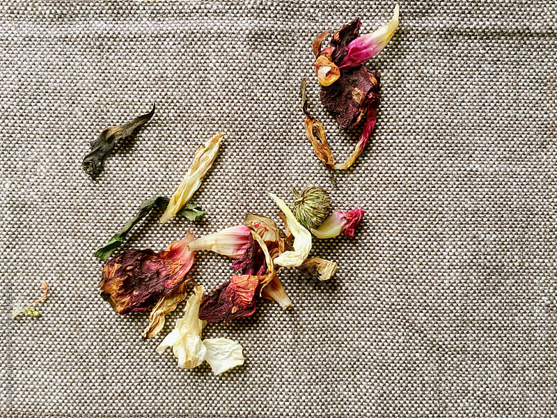 Withered, fallen Petals on Linen by Claudia Lommel for Stocksy United