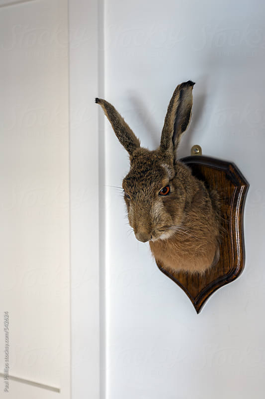 Wall mounted Hare head by Paul Phillips for Stocksy United