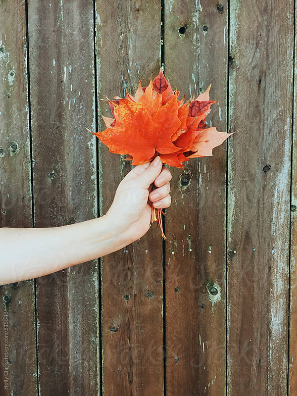 Hand holding colorful leaves against a fence by Holly Clark for Stocksy United