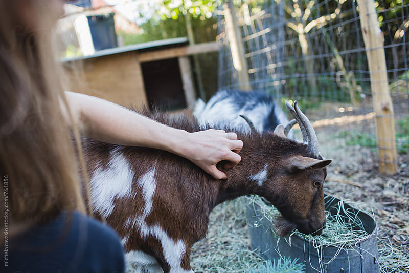 Woman caressing her goat by michela ravasio for Stocksy United