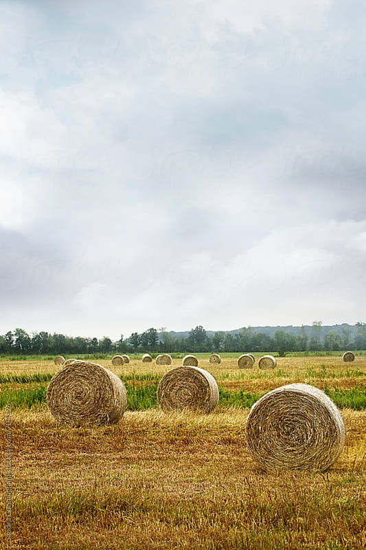 Bales of hay in field by Sandra Cunningham for Stocksy United