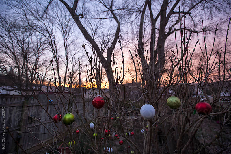 Christmas Ornaments in a City Back Yard at Dawn by Holly Clark for Stocksy United