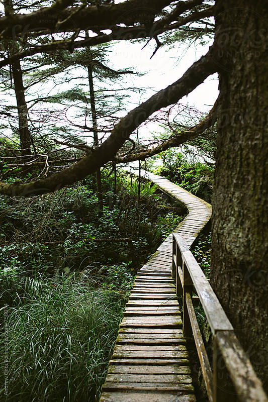 Wooden Hiking Trails - digital file by Andrew Cebulka for Stocksy United