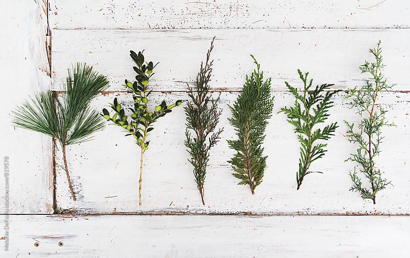 wreath making by Melanie DeFazio for Stocksy United
