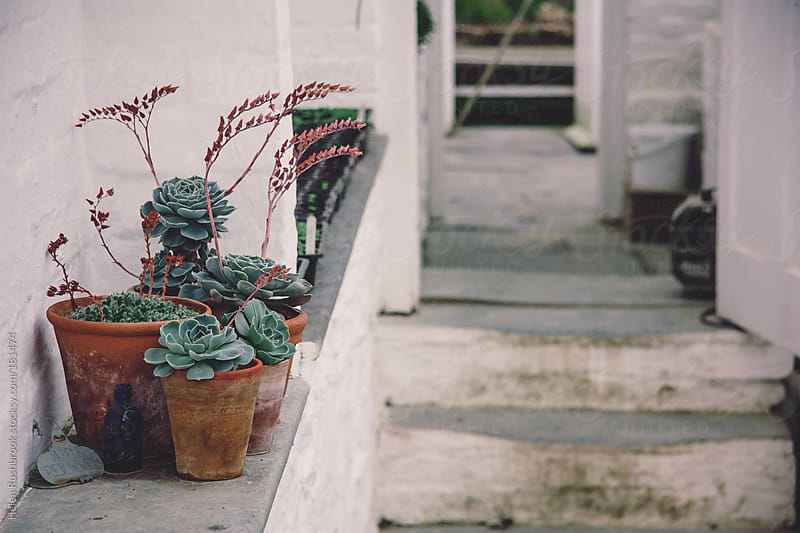 Potted succulents on a wall by Helen Rushbrook for Stocksy United