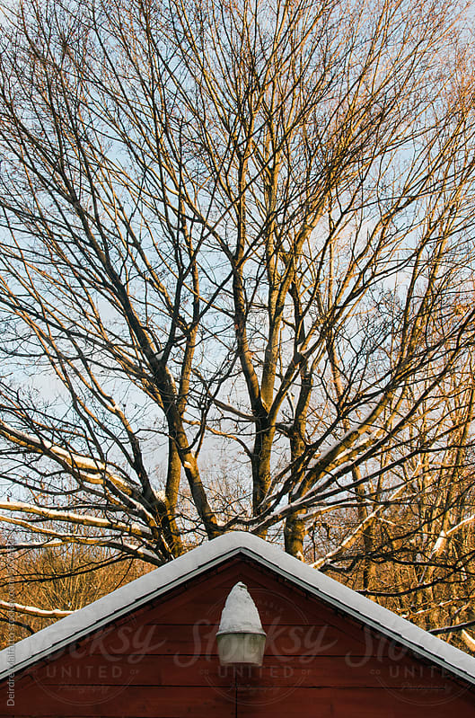 snow on a barn roof and a snow-covered tree by Deirdre Malfatto for Stocksy United