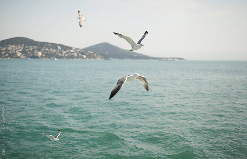 Seagulls by Milles Studio for Stocksy United