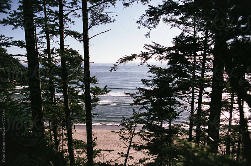 The Pacific Ocean and Beach Through the Woods by Chase Castor for Stocksy United