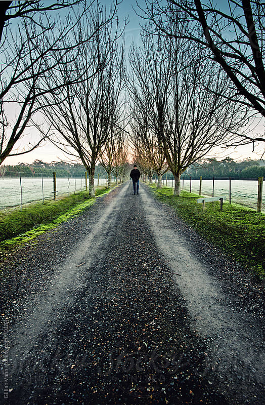 long driveway in winter by Gillian Vann for Stocksy United