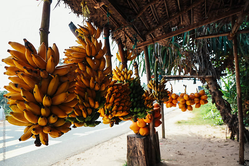 Tropical fruits of Sri Lanka by Murtaza Daud for Stocksy United