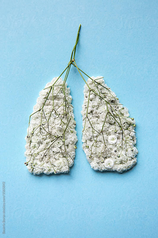 Alternative medicine concept: Human lungs made of flowers and plants by Beatrix Boros for Stocksy United