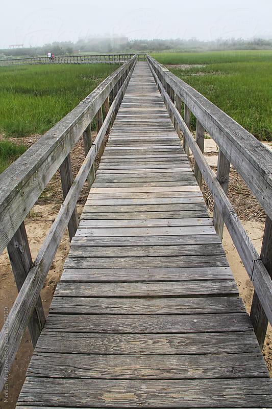 Long wooden walkway on a marsh by Monica Murphy for Stocksy United