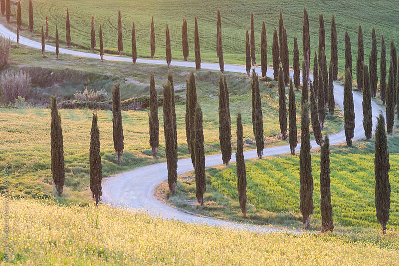 Curvy cypress road by Marilar Irastorza for Stocksy United