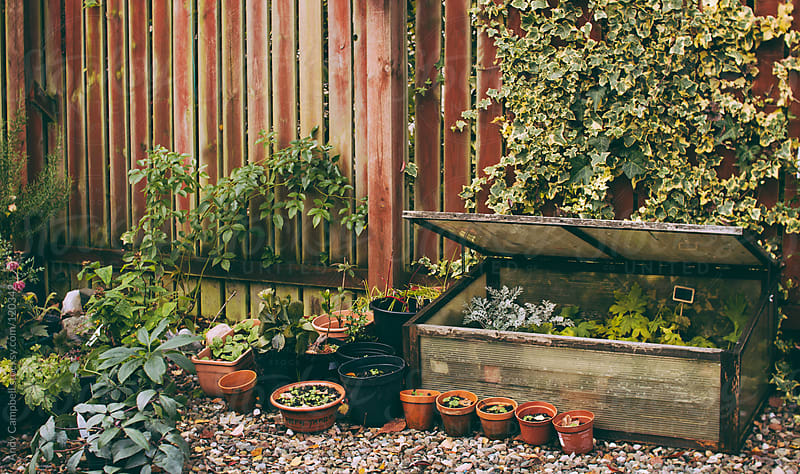 An organic home garden in the springtime by Andy Campbell for Stocksy United