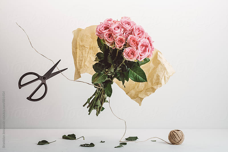 Floating Pink Roses on the White Background by Branislav Jovanovic for Stocksy United