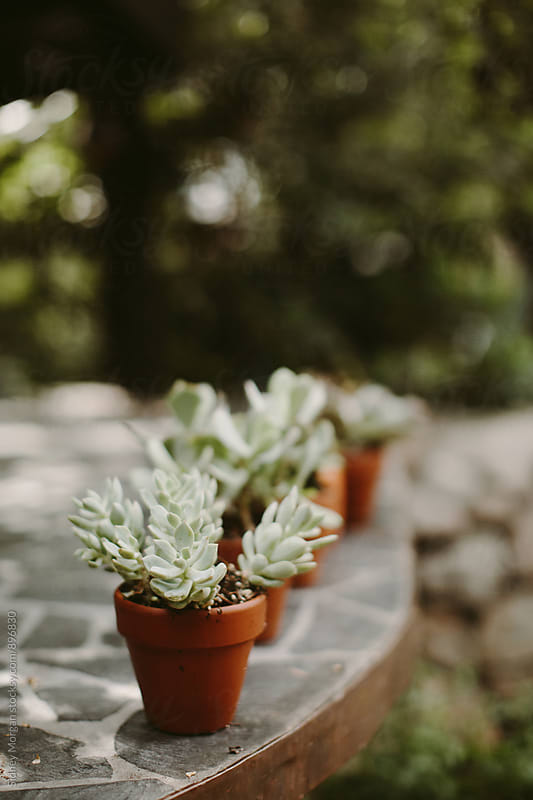 Succulent  by Sidney Morgan for Stocksy United