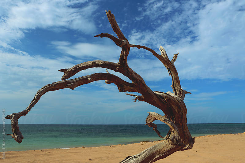 branch in the shore of a lonely beach by Gabriel Diaz for Stocksy United