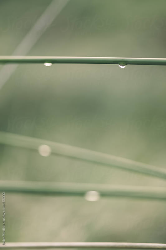 plants with two little drops after rain by Javier Pardina for Stocksy United