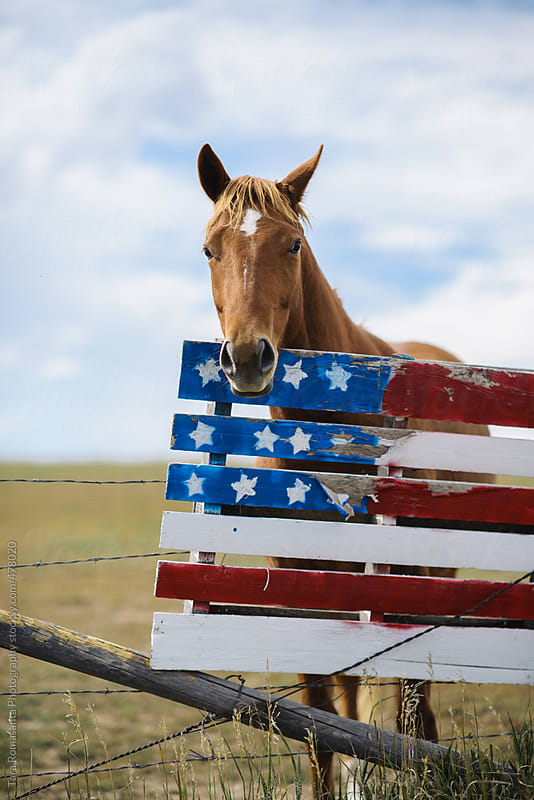 horse looks over a hand painted American flag by Tara Romasanta for Stocksy United