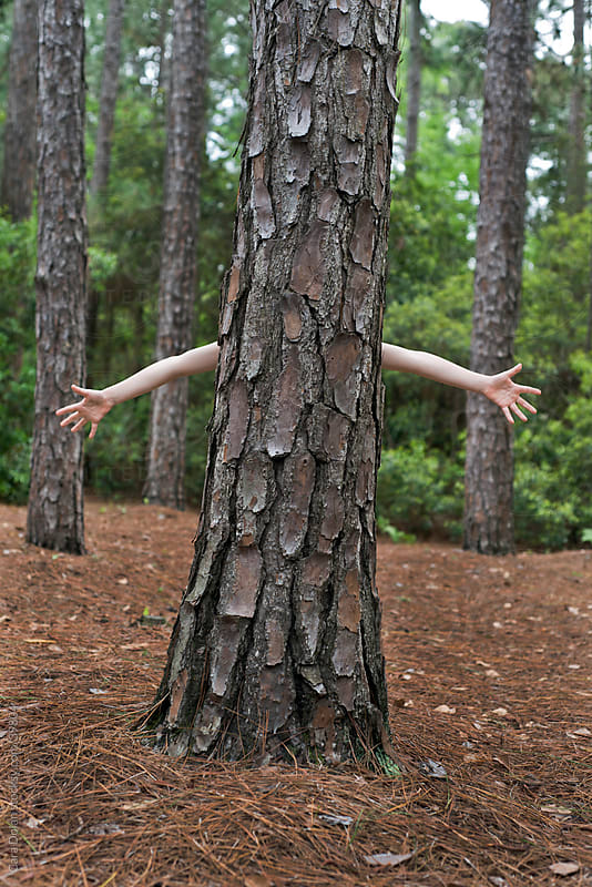 Tree has arms by Cara Dolan for Stocksy United