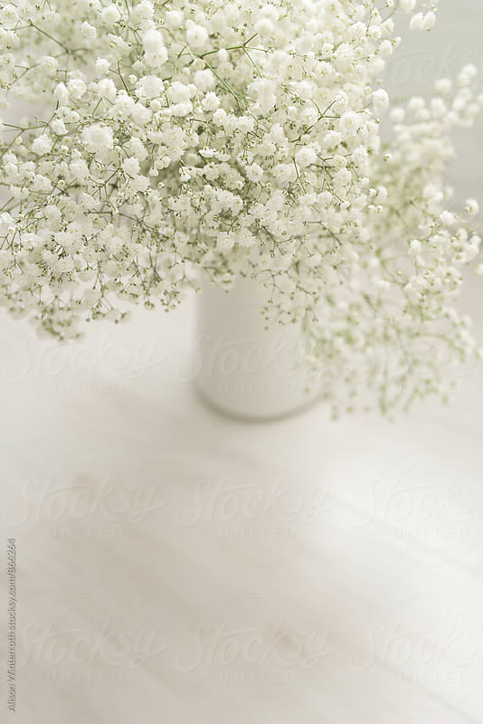 A Vase Of Baby's Breath Flowers by Alison Winterroth for Stocksy United